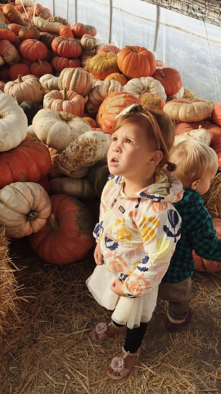 Charlie Rowan Designs Pumpkin Patch
